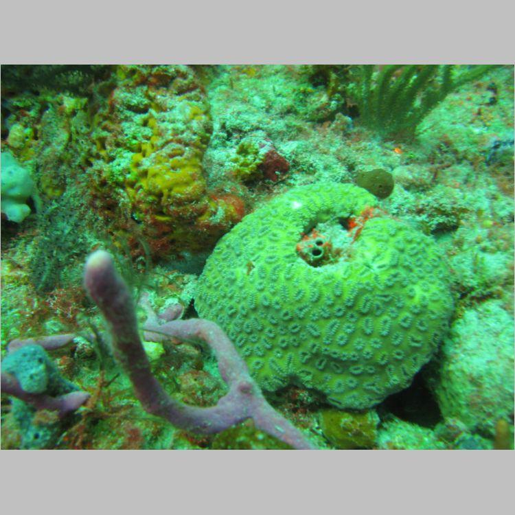 Dive_10-July-2010_PuraVida_DoubleLedges-5793.JPG