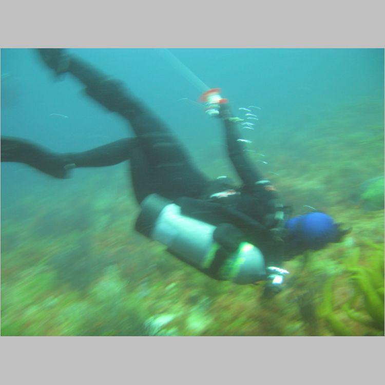 Dive_10-July-2010_PuraVida_DoubleLedges-5804.JPG