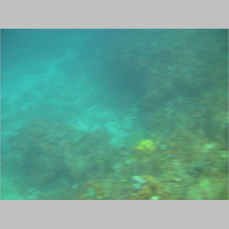 Dive_10-July-2010_PuraVida_DoubleLedges-5815.JPG