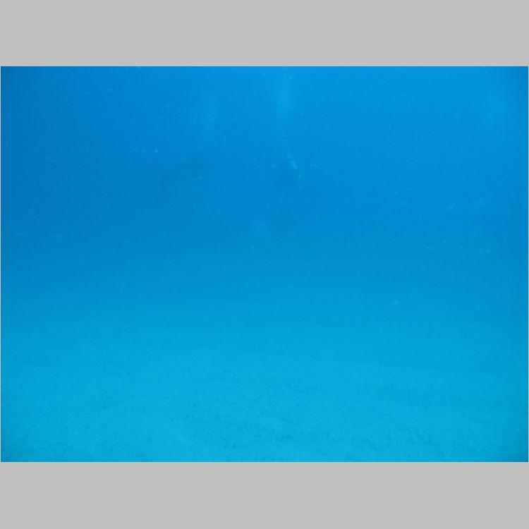 Dive_10-July-2010_PuraVida_Mizpah-5710.JPG