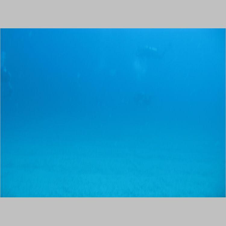 Dive_10-July-2010_PuraVida_Mizpah-5711.JPG