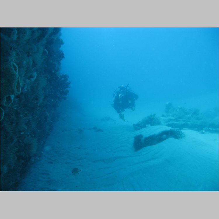 Dive_10-July-2010_PuraVida_Mizpah-5724.JPG