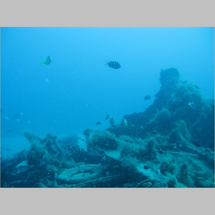 Dive_10-July-2010_PuraVida_Mizpah-5729.JPG