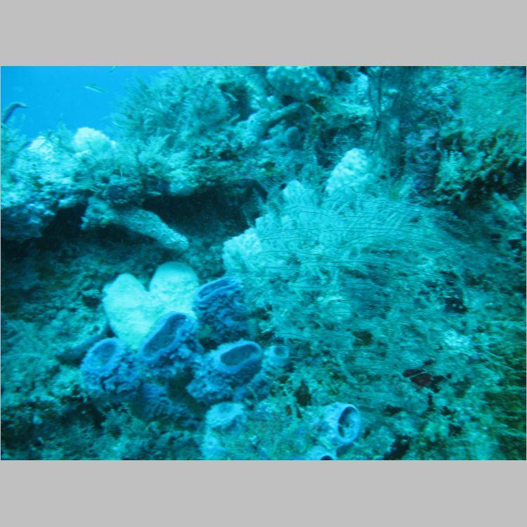 Dive_10-July-2010_PuraVida_Mizpah-5730.JPG