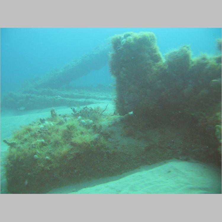 Dive_10-July-2010_PuraVida_Mizpah-5755.JPG