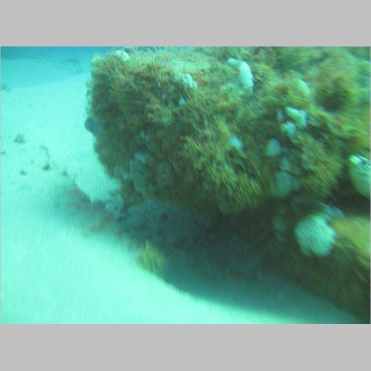 Dive_10-July-2010_PuraVida_Mizpah-5756.JPG