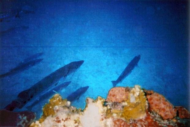 july2405-Barracuda At Duane Bow.jpg