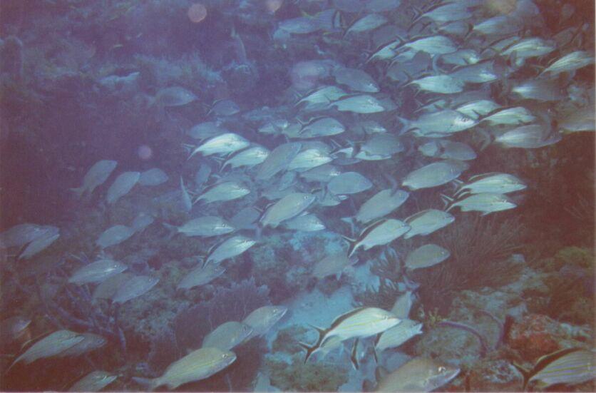 Lot's of Fish