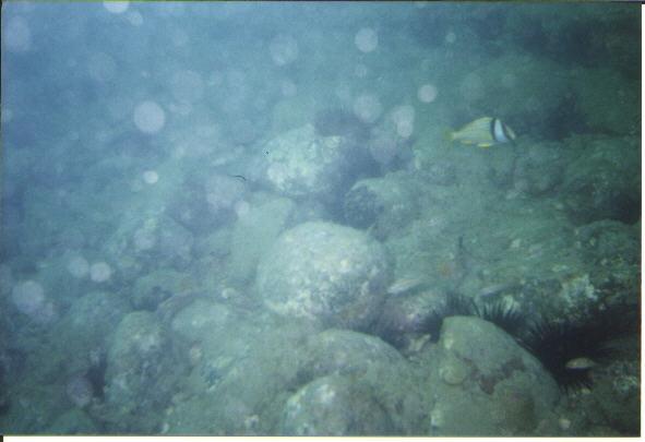 Urca de Lima - Ballast Stones